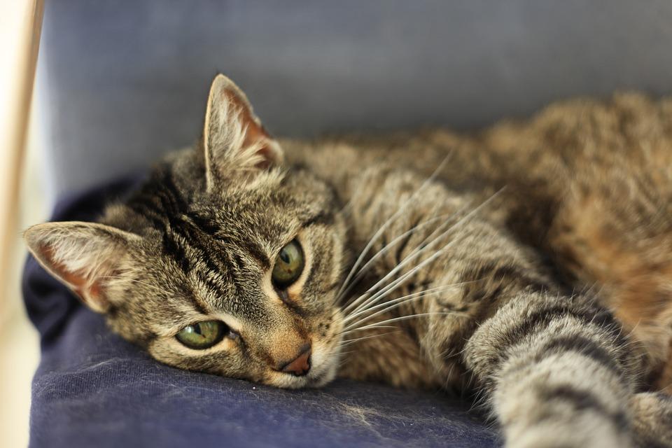 cat-3444490_960_720